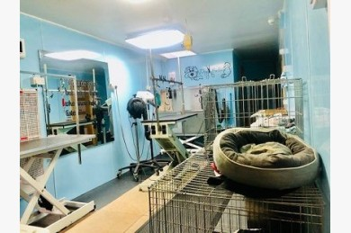 Kennels/cattery For Sale - Photograph 21