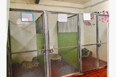 Kennels/cattery For Sale - Photograph 14