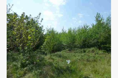 Land For Sale - Photograph 2